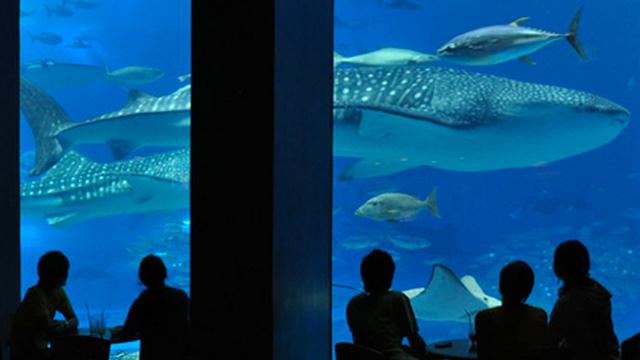 美ら海水族館のカフェ