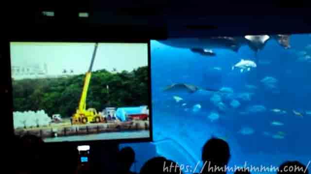 美ら海水族館の「黒潮の海の水槽解説」