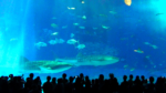 美ら海水族館の黒潮水槽正面