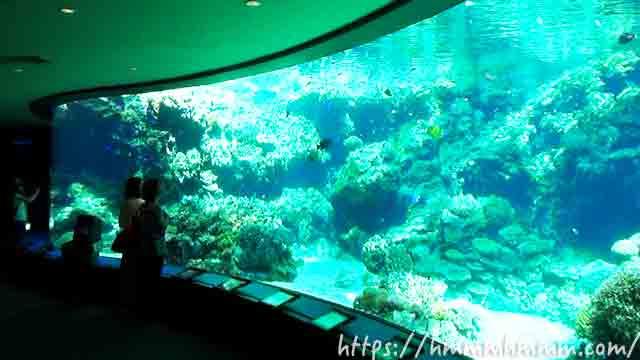 美ら海水族館の「サンゴの海・熱帯魚の海」