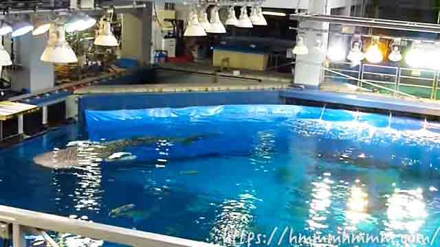 美ら海水族館の黒潮探検