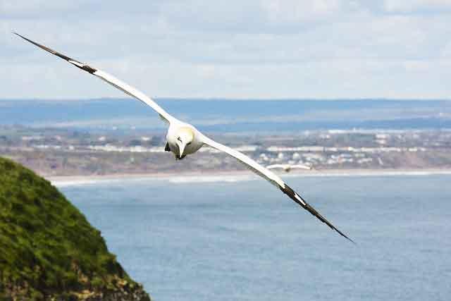 大空を滑空する鳥