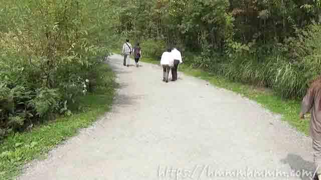 美瑛の青い池 遊歩道を直進