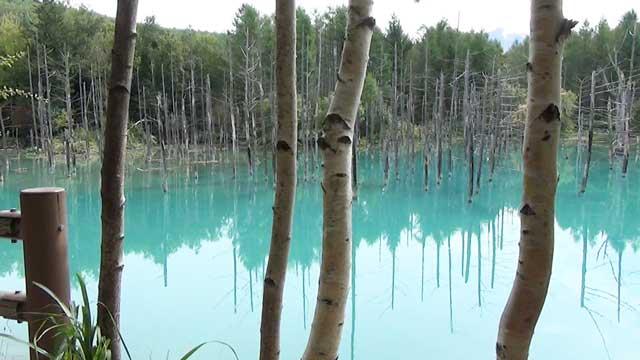 美瑛の青い池 小道からの風景